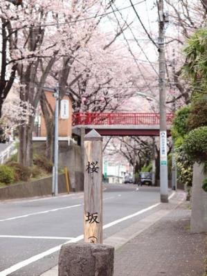 Sakuraslope